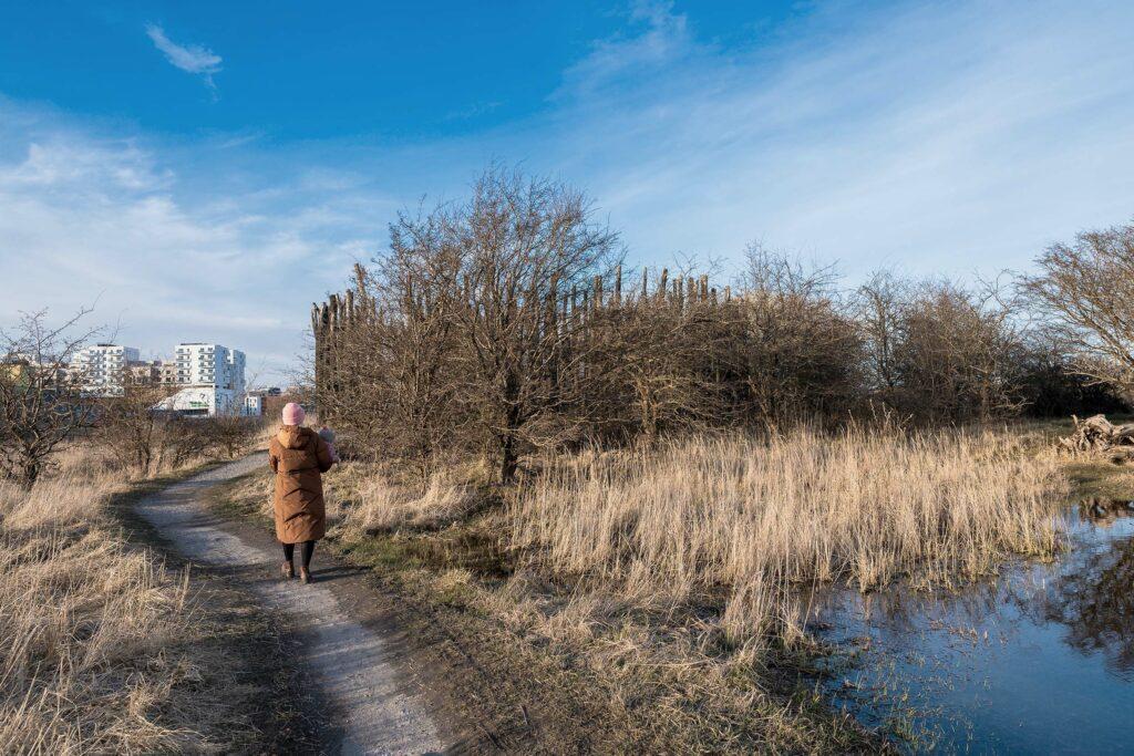 Dame går på Amager Fælled om vinteren